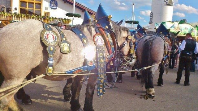 oktoberfest-muenchen-volksfest-zeltfest-september-groesstes-fest-festival-paulaner-hofbraeu-spaten-bier